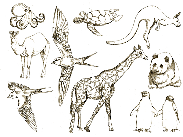clip library library Drawing pic animal. Drawings on behance