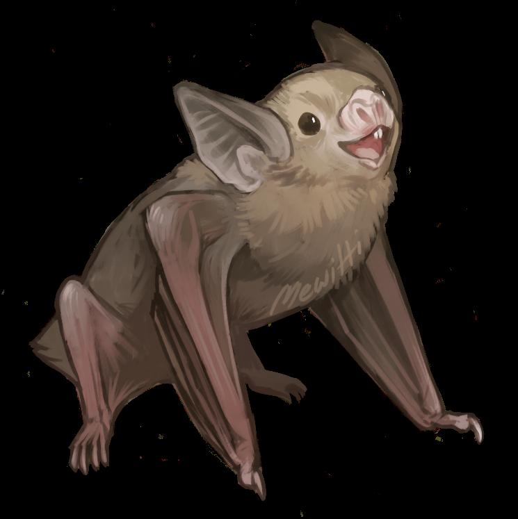 picture Vampire Bat Drawing at GetDrawings