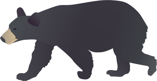 png black and white download black bear drawing