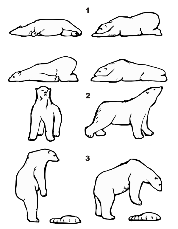 graphic free library Image result for bear anatomy drawing