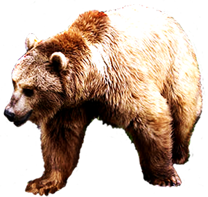 picture free download Realistic Bear