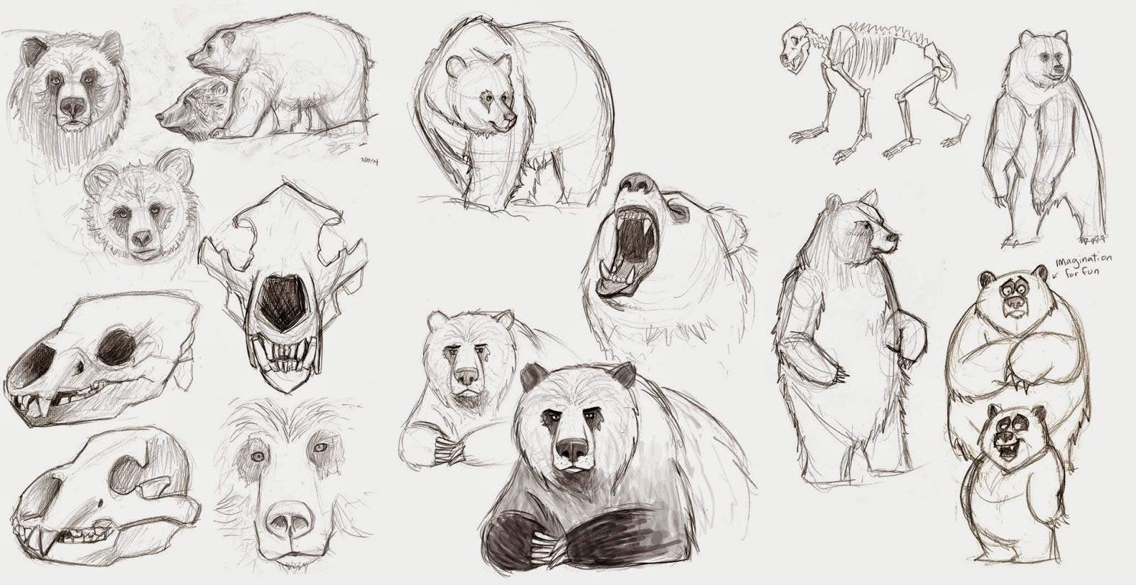 black and white Grizzly bear and sketches. Drawing bears reference