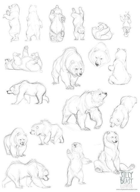 picture royalty free download Bear guide referenc . Drawing bears reference