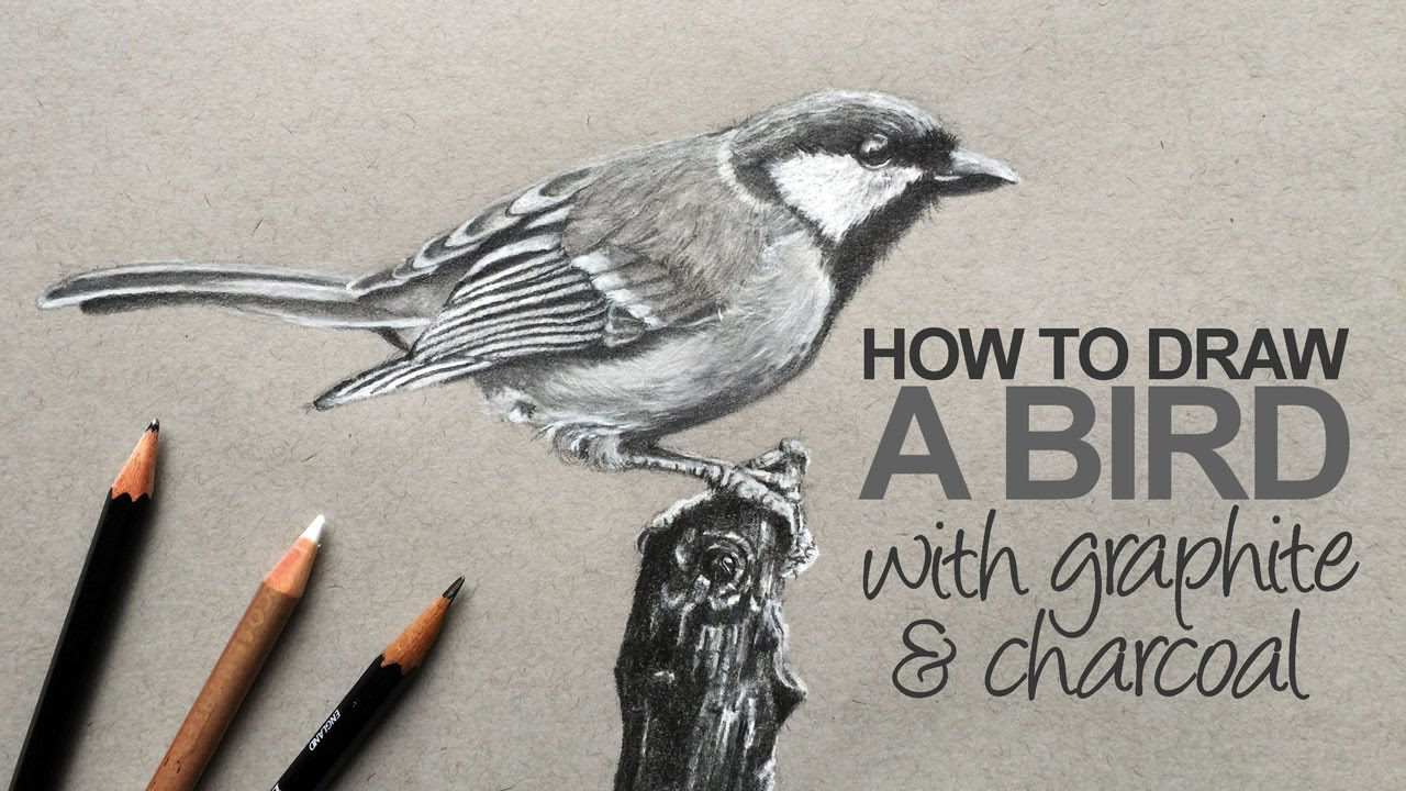 image free download How to draw a. Drawing charcoal bird