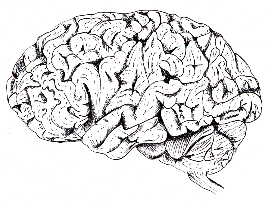 clipart freeuse stock Brain Drawing at GetDrawings
