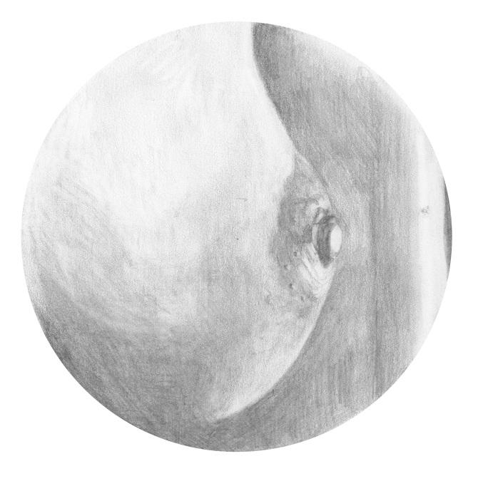 graphic freeuse download Drawings cecilia granara . Drawing breast pencil.