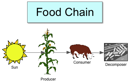 royalty free library Food Chain Drawing at GetDrawings