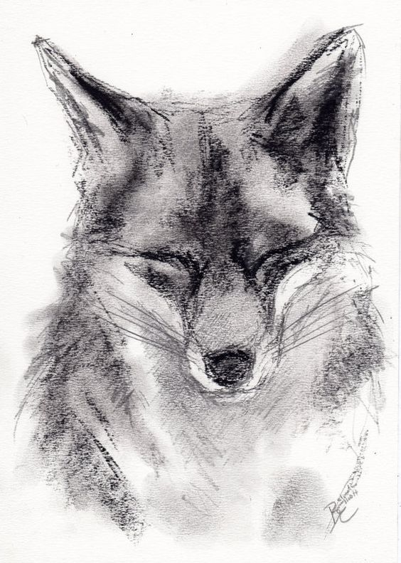 clipart library library Belinda elliott in . Drawing charcoal animal