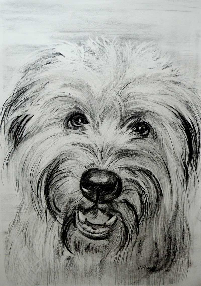clipart freeuse stock Drawing charcoal animal. Custom pet paintings hand