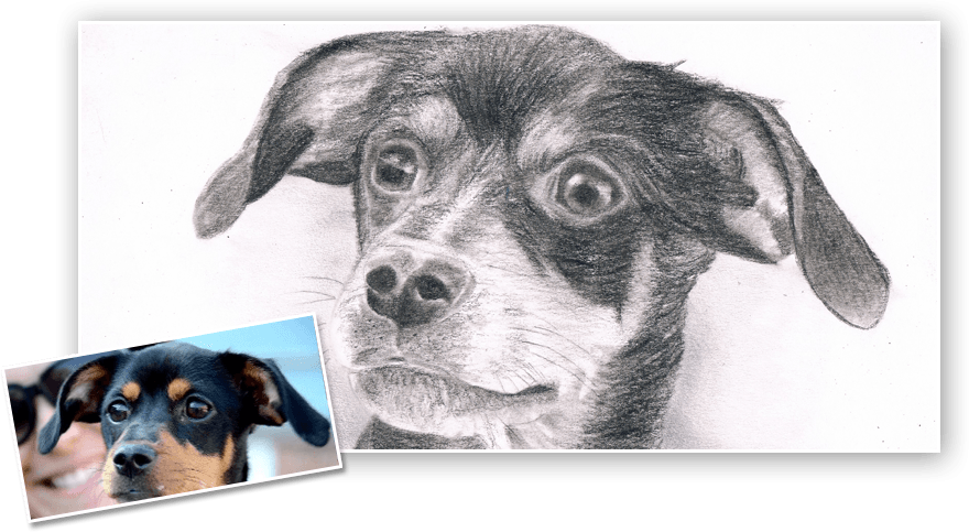 clip art transparent stock Drawing charcoal animal. From photo artist gallery