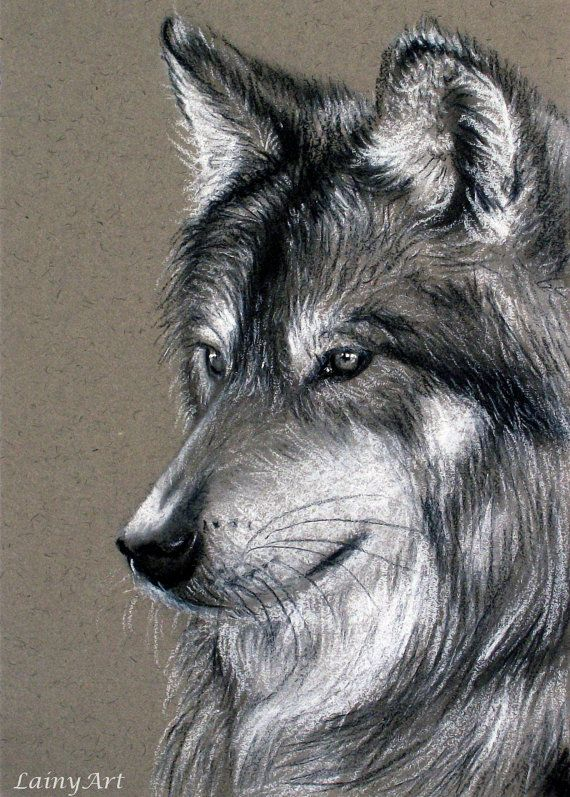 jpg library library Drawing charcoal animal. Wolf portrait by lainyart