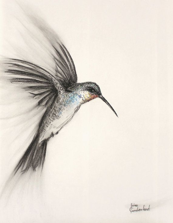 vector stock Original art of a. Drawing charcoal bird