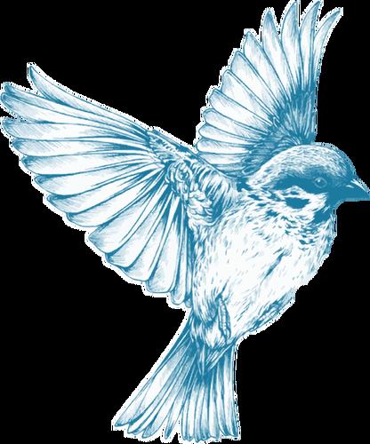 banner transparent download Drawing charcoal bird. Graphics of vintage blue