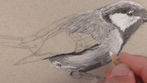 black and white stock Drawing charcoal bird. Draw a realistic with