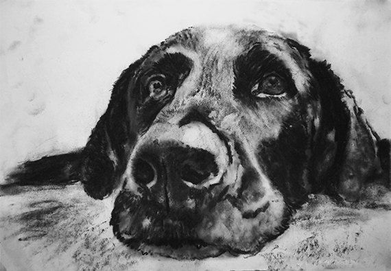 clipart transparent stock Black and white google. Drawing charcoal dog