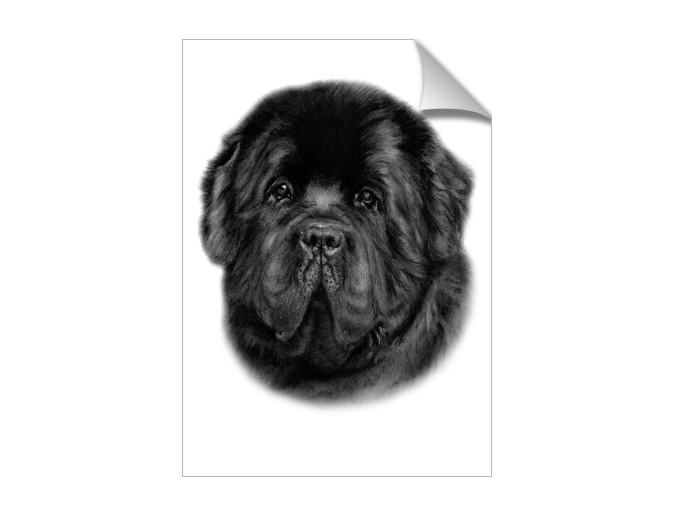 picture freeuse library Mysoti danguole newfoundland artwork. Drawing charcoal dog