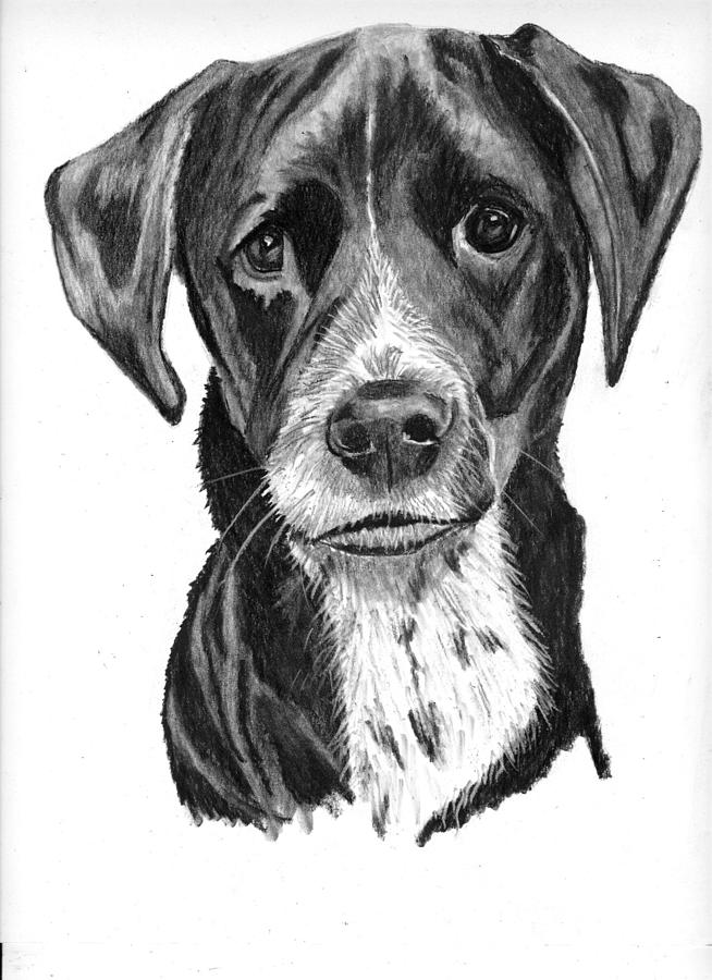 svg free Drawing charcoal dog.