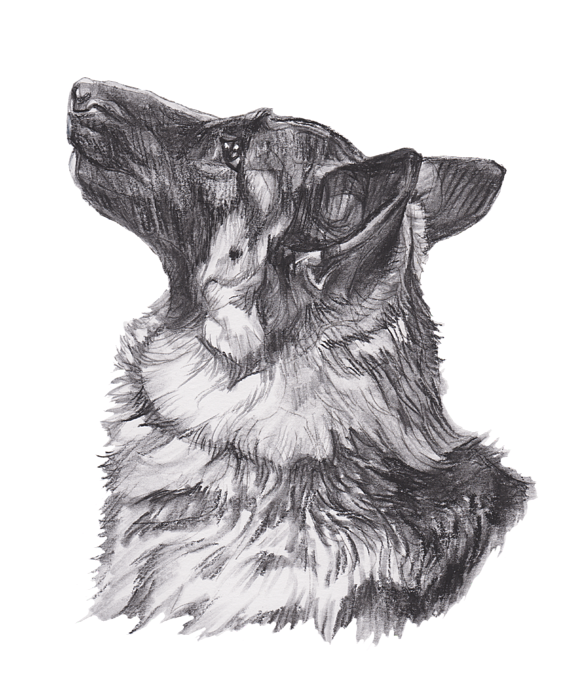 clipart transparent Drawing charcoal dog. German shepherd profile tote