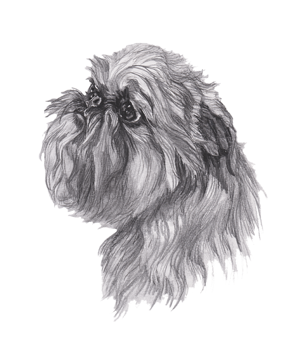 clipart free download Brussels griffon portrait greeting. Drawing charcoal dog