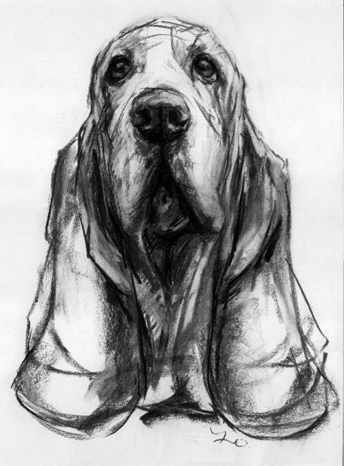 image transparent Compelling and creative drawings. Drawing charcoal dog