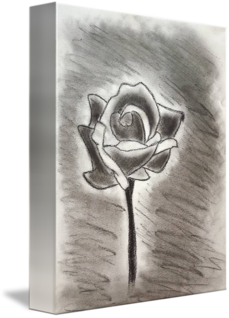 free library Drawn with by rannveig. Drawing charcoal flower