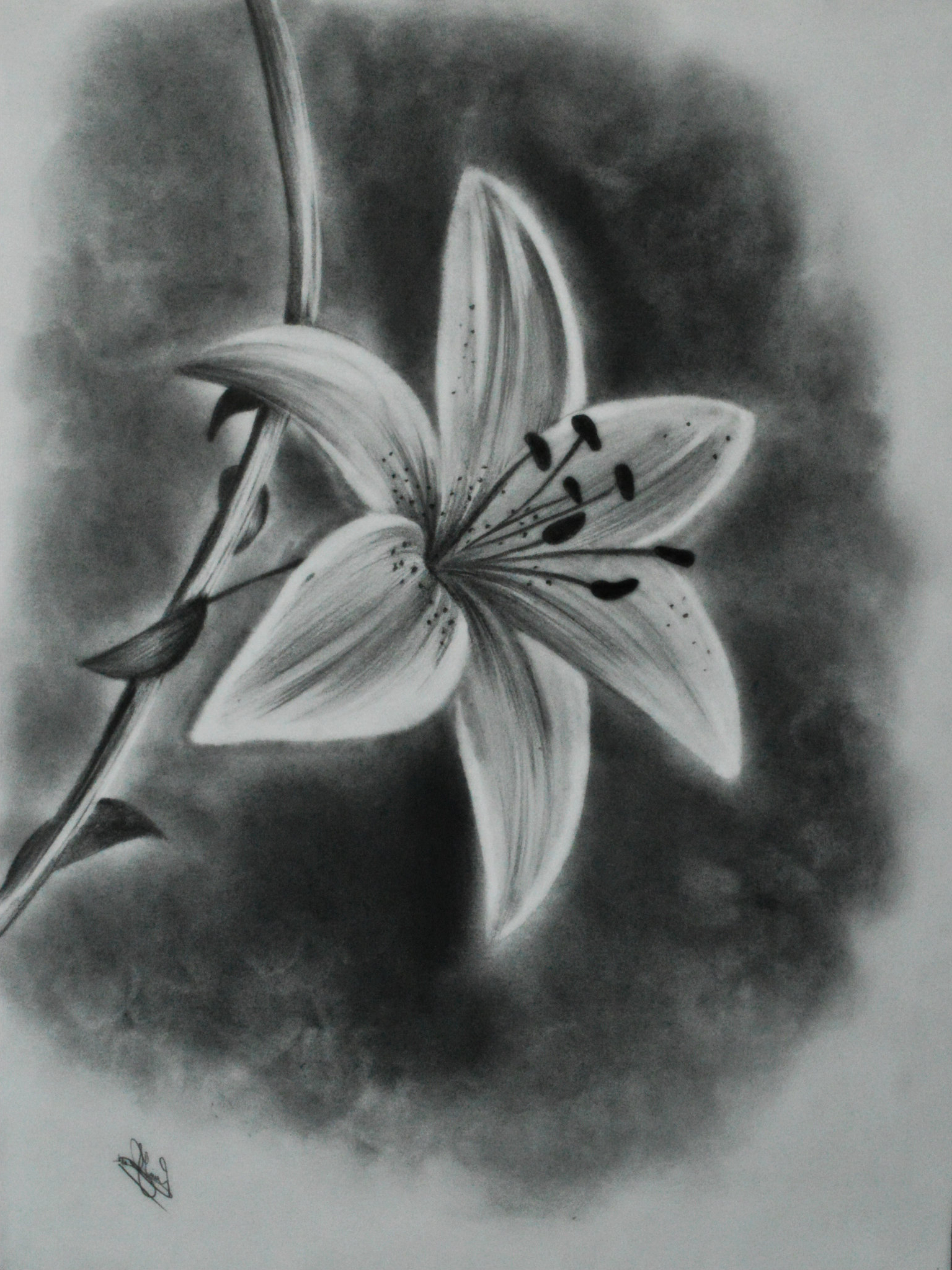 jpg Drawing charcoal flower. At paintingvalley com explore