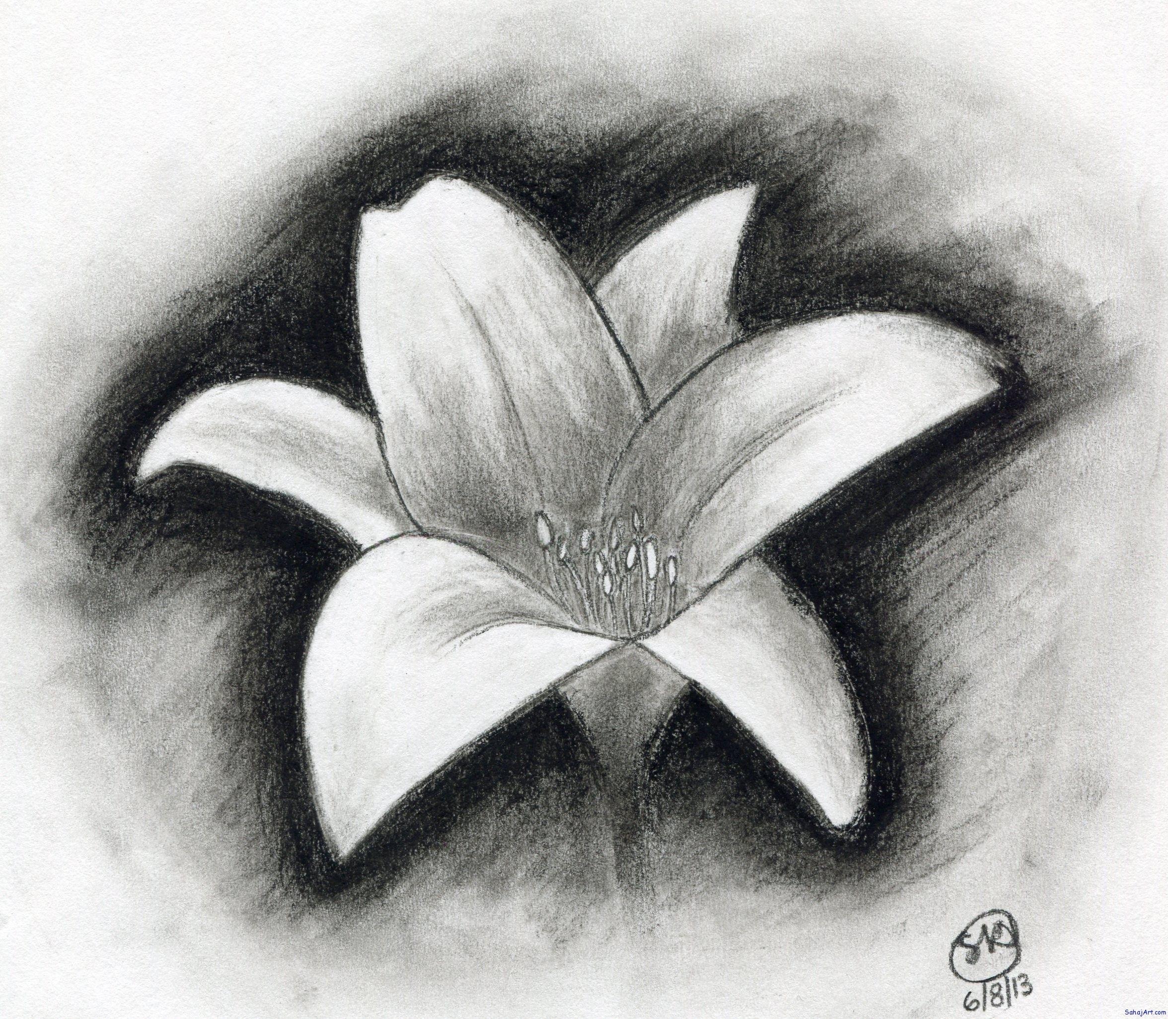 jpg download Easy drawings flowers shading. Drawing charcoal flower