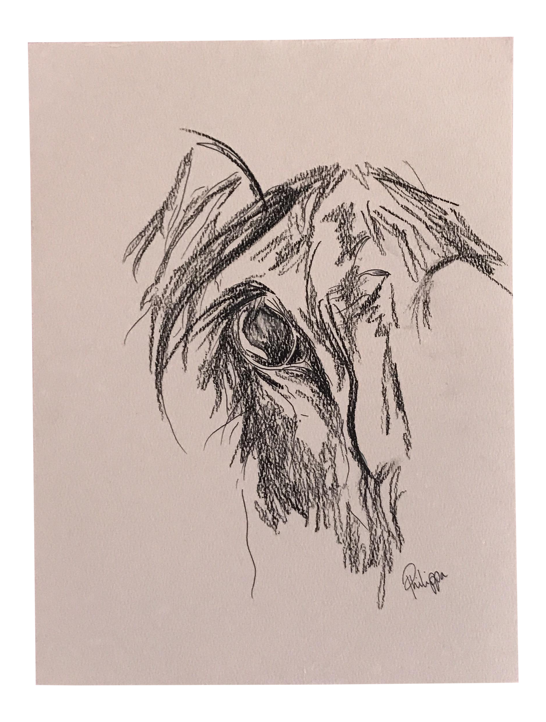 graphic Original artwork ink on. Drawing charcoal horse