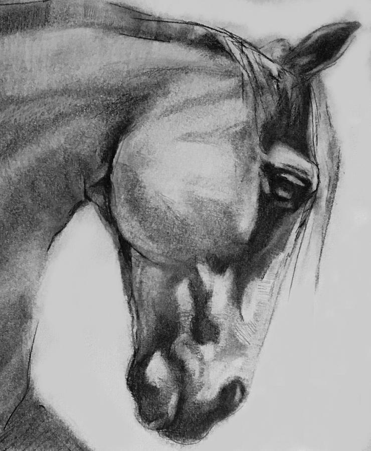 png freeuse download Cheval classic graphite . Drawing charcoal horse