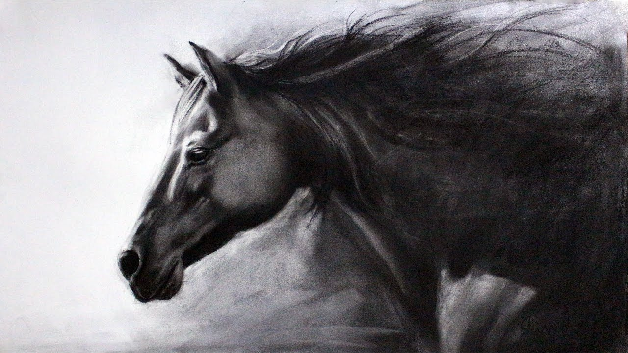 banner library Drawing charcoal horse. Time lapse video