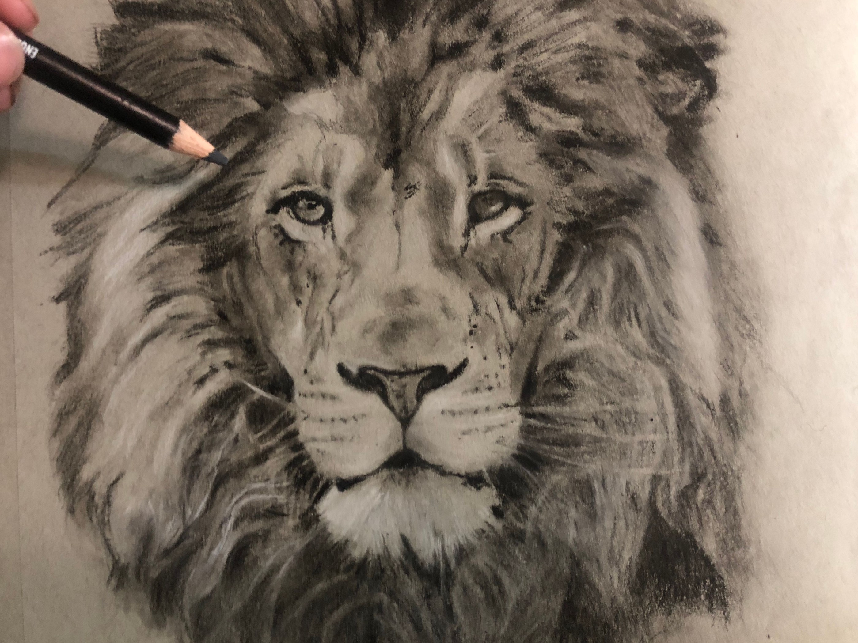 svg library stock Drawing charcoal lion. A realistic art with