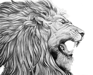 vector transparent Collection of free roaring. Drawing charcoal lion