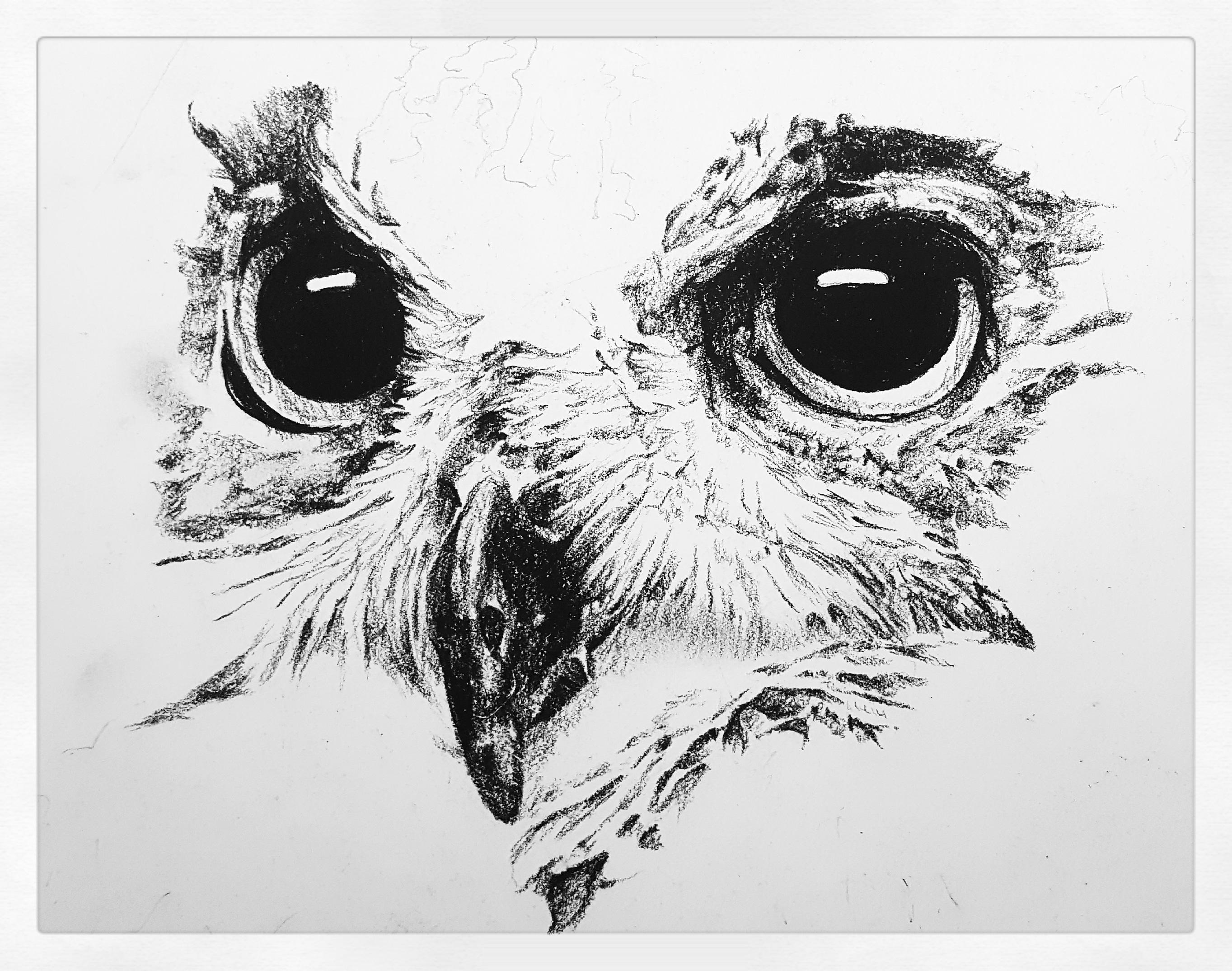 image freeuse library Drawing charcoal owl.