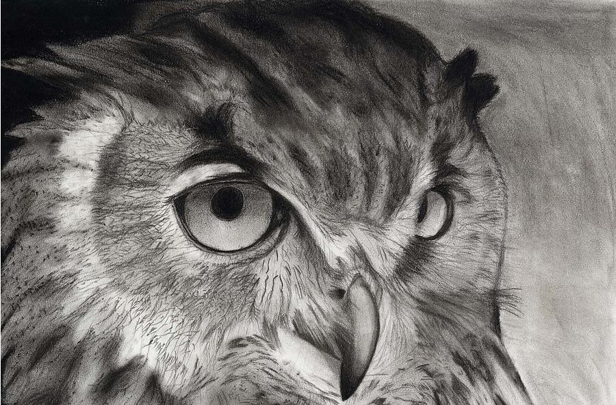 image library download Horned . Drawing charcoal owl