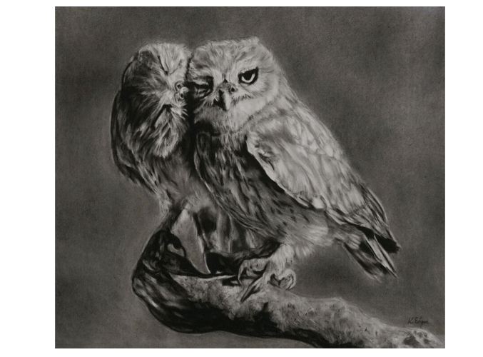 vector free stock Karen edgar is a. Drawing charcoal owl