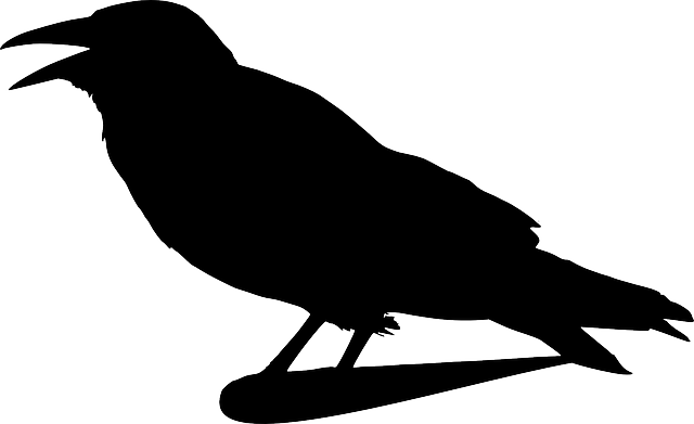 image library library Drawing charcoal raven. Free image on pixabay