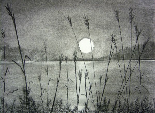 vector black and white library Drawing charcoal sunset. Over pamlico sound by