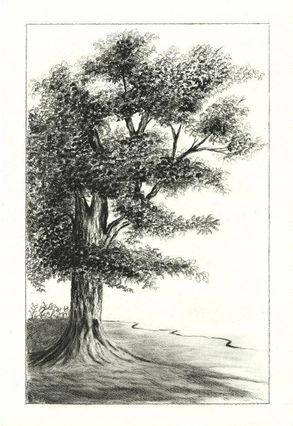 svg library stock Drawing charcoal tree. Oak art landscape