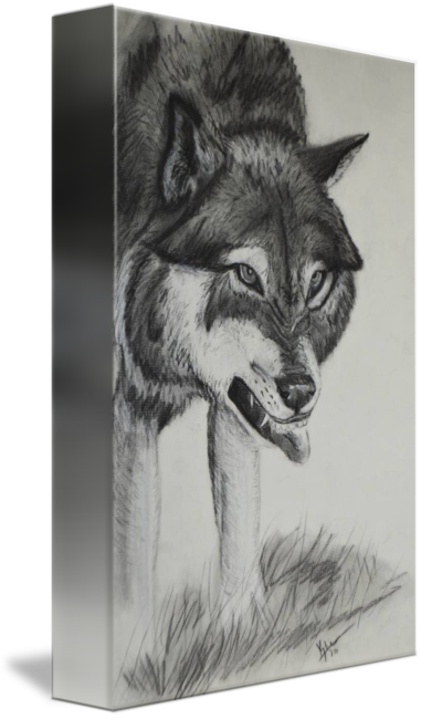 freeuse library Snarling by kylie greshik. Drawing charcoal wolf