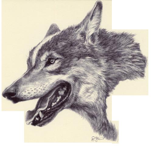 jpg freeuse stock Drawing charcoal wolf. Rebecca yanovskaya ballpoint pen