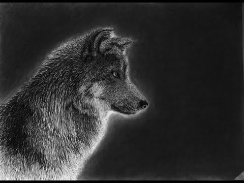 png transparent library Realistic . Drawing charcoal wolf