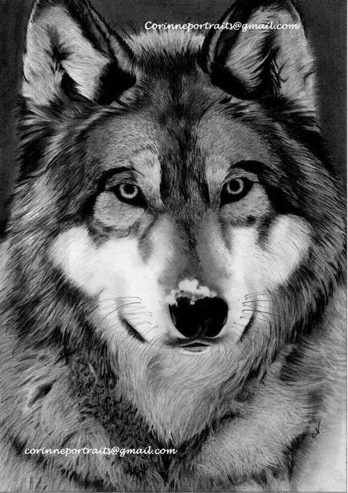 graphic royalty free Drawing charcoal wolf. Google search black white