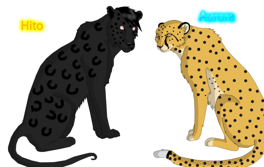 clip black and white library Collection of free Cheetah drawing head