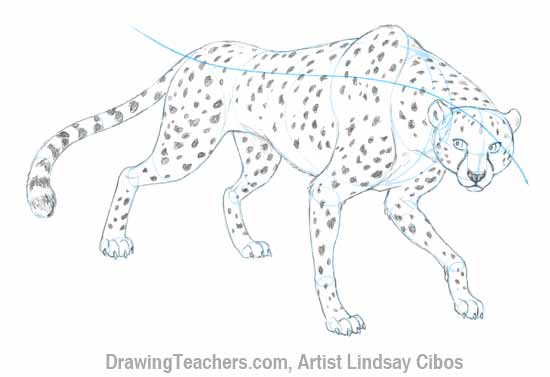 banner free library How to Draw a Cheetah Step by Step