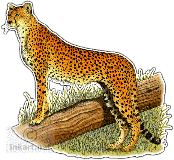 banner royalty free download Drawn cheetah colored