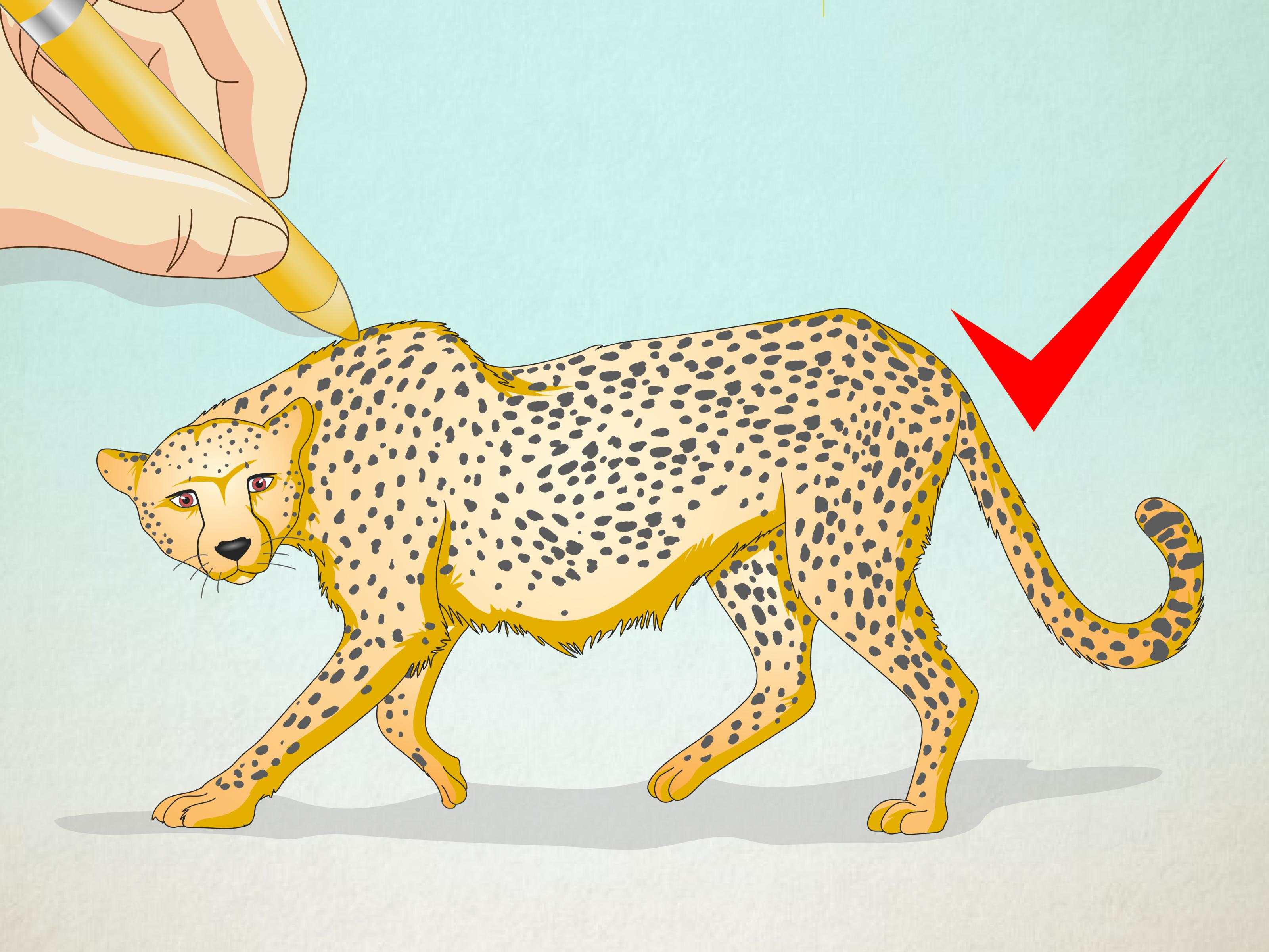 clipart transparent How to Draw a Cheetah