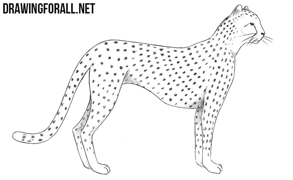 png library library How to draw a. Drawing cheetahs