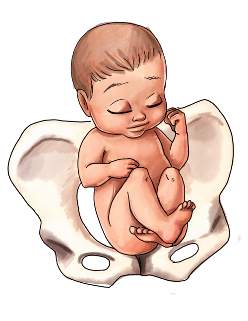 clip art transparent download The Ultimate Guide to Baby Position in the Womb