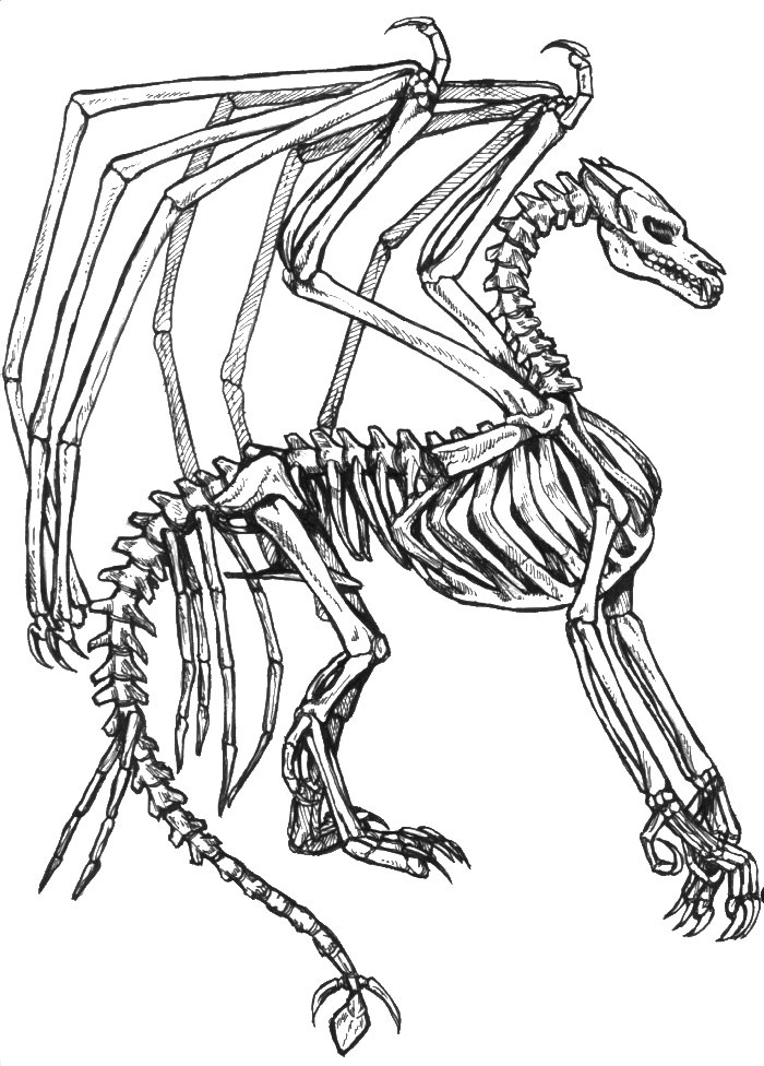 jpg transparent Dragon Skeleton Drawing at GetDrawings