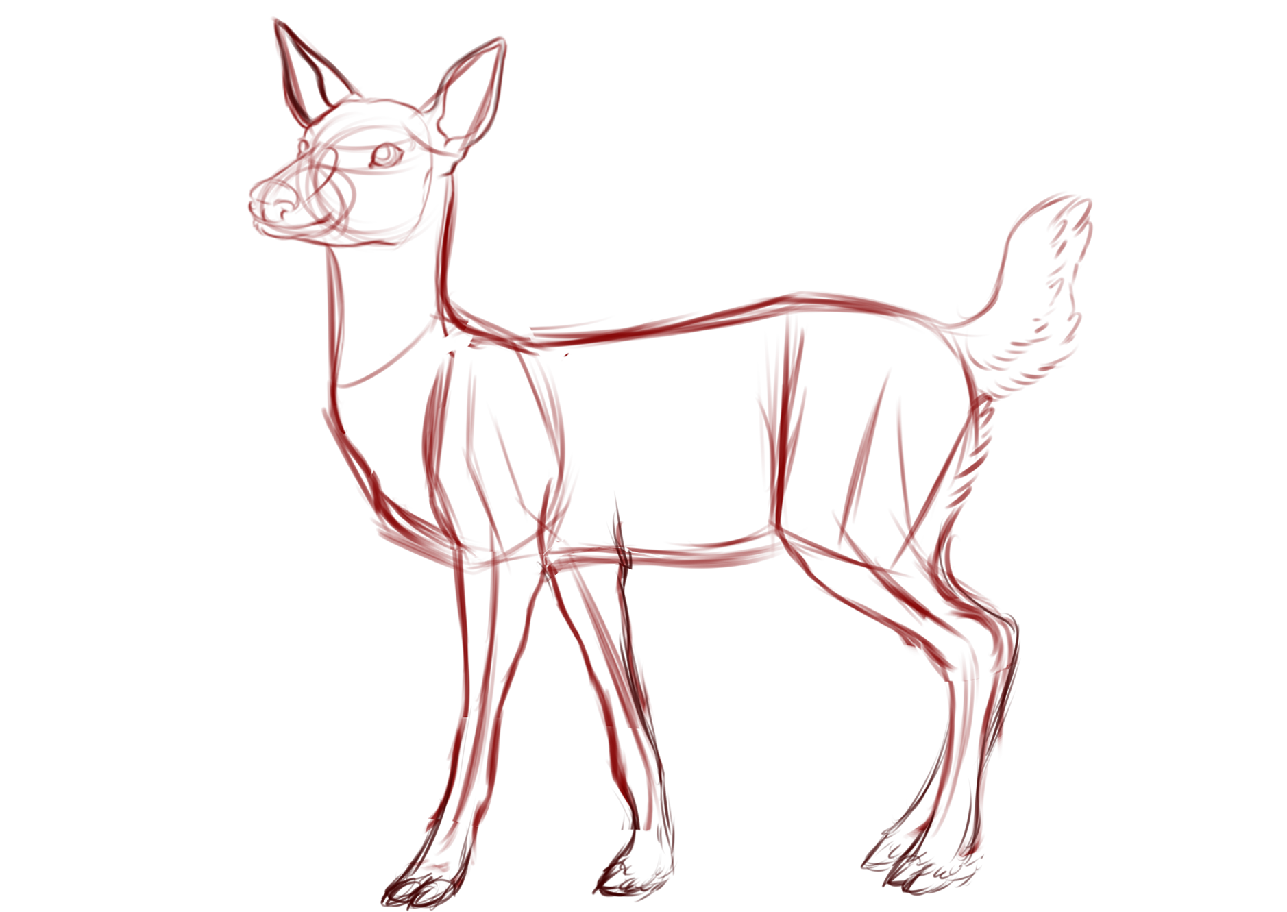 jpg freeuse library Deer tutorial at getdrawings. Drawing technique full body